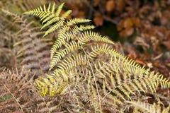 Впечатление цветов осени Стоковое Изображение