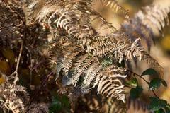 Впечатление цветов осени Стоковые Изображения RF