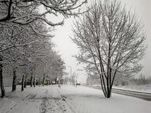 Впечатления зимы - черно-белые 12 стоковые фото