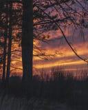 Впечатляющие, яркие небо и сосна на заходе солнца, сфотографированном немедленно после набора солнца под горизонтом стоковая фотография rf