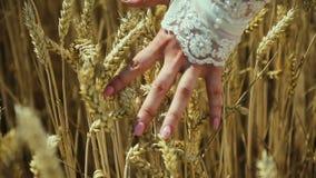Впечатляющий вид руки молодой женщины, который касаются на шипах зрелого сток-видео