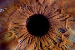 Впечатляющий глаз макроса Стоковое Изображение RF