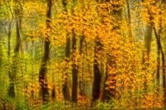 Впечатление цветов падения стоковая фотография