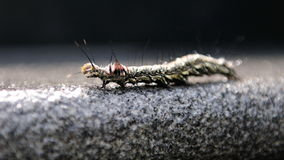 вползать гусеницы волосатый Стоковое Фото