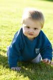 вползать младенца Стоковые Изображения RF