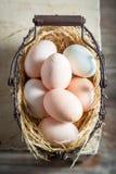 Вполне витаминов и экологических яичек от курятники Стоковое Изображение RF