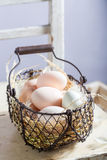 Вполне витаминов и экологических яичек от сельской местности Стоковая Фотография