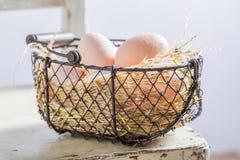 Вполне витаминов и экологических яичек от фермы Стоковое фото RF