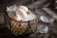Вполне витаминов и экологических яичек с пер курицы Стоковые Изображения RF