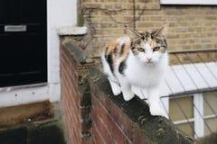 Вползая сельский кот Стоковые Изображения