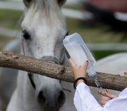 Впрыска лошади Стоковые Изображения