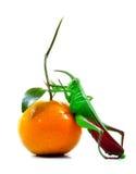 Враг плодоовощ Стоковое фото RF