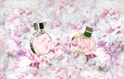 Вращая флаконы духов на розовой предпосылке пионов цветков с космосом экземпляра Парфюмерия, косметики, женские аксессуары стоковые изображения