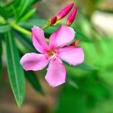 Вращая цветок Стоковое фото RF
