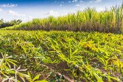 Вращение урожая Стоковое Изображение RF