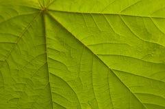 временя весны листьев Стоковые Фотографии RF