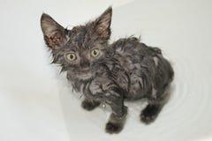 Время ванны для котенка фермы стоковое фото rf