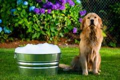 Время ванны собаки Стоковая Фотография