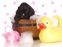 Время ванны щенка Стоковое фото RF