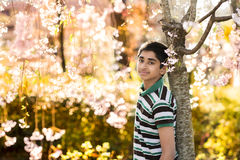 Время весны… подняло листья, естественная предпосылка Стоковая Фотография