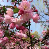 Время весны… подняло листья, естественная предпосылка Стоковые Изображения RF
