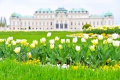 Время весны дворца бельведера Стоковое Изображение RF