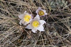Время весны в холмах Стоковая Фотография RF