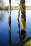 Время весны в Killykeen Forest Park стоковые фотографии rf
