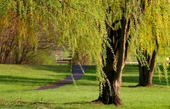 время весны парка Мичигана Стоковые Изображения RF