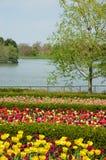 время весны пейзажа стоковое изображение