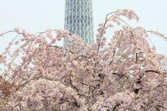 Время весны токио Стоковое Фото