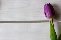 Время весны, цвета весны, цветки и свечи, пинк, пурпур, симпатичное время, славный запах, симпатичные цвета, романтичные цвета, в Стоковая Фотография