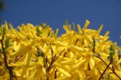 время весны Стоковая Фотография RF