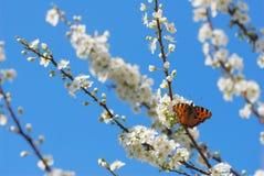 время весны Стоковое фото RF