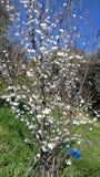 Время весны Tizeghben Стоковое Изображение RF