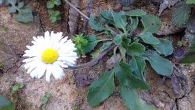 Время весны Tizeghben Стоковая Фотография
