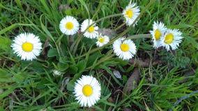 Время весны Tizeghben Стоковые Фото