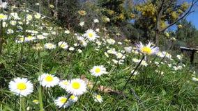 Время весны Tizeghben Стоковое фото RF
