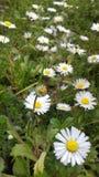 Время весны Tizeghben Стоковые Фотографии RF
