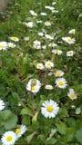 Время весны Tizeghben Стоковое Изображение