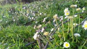 Время весны Tizeghben Стоковая Фотография RF