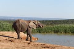 Время воды - слон Буша африканца Стоковое Изображение