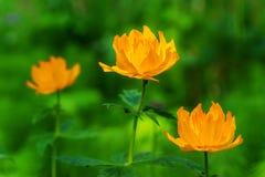 Время -го июнь - цветя глобуса стоковое фото