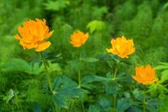 Время -го июнь - цветя глобуса стоковое изображение