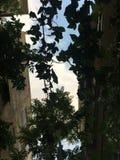 время дождя зеленого растения стоковая фотография rf