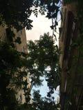 время дождя зеленого растения стоковые фото