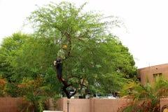 Время дерева осени Стоковые Изображения