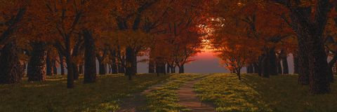 время захода солнца весны дороги пущи стоковые фотографии rf