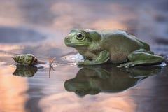 Время захода солнца улитки и лягушки Стоковое Фото