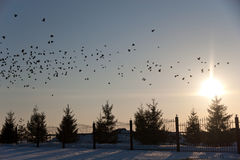 Время захода солнца с птицами Стоковое Изображение